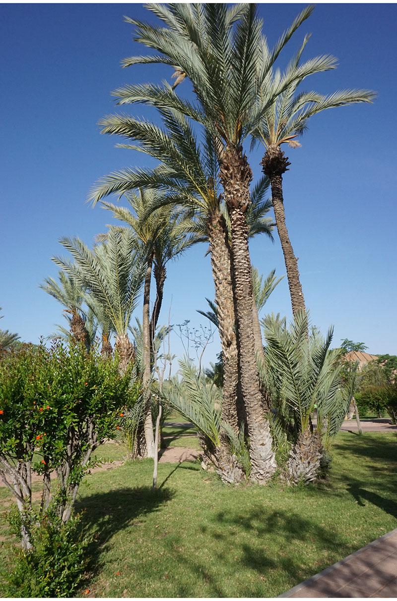 pullman-marrakech12